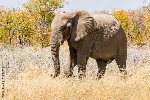 Garden Poster Elephant Elefant