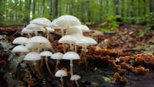 Small White Mushrooms Growing ...