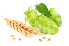 Hop Cones And Wheat Ears Isolated On White Background. Beer Brewing Ingredients. Beer Brewery Concept. Beer Background.