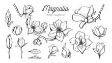 Magnolia Flower Set. Vector Hand Drawn Botanical
