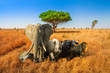 canvas print picture - Africa safari scene with wild animals. African Big Five: Leopard, Elephant, Black Rhino, Buffalo and Lion in savannah landscape. Copy space with blue sky. Wildlife background.