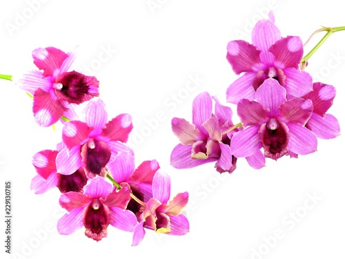 Recess Fitting Orchid pink orchids flower bouquet isolated on white background