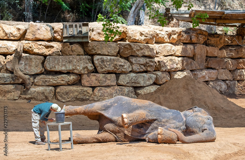 Elephant keeper clean leg of his lying animal Wallpaper Mural