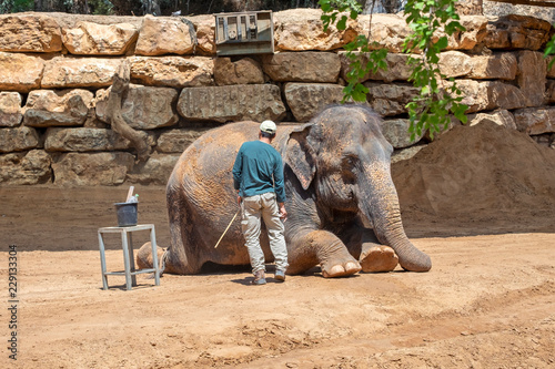 Leinwand Poster Elephant keeper clean his lying animal