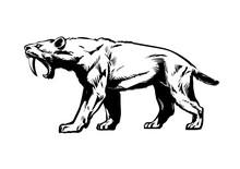 Saber Toothed Tiger. Smilodon....