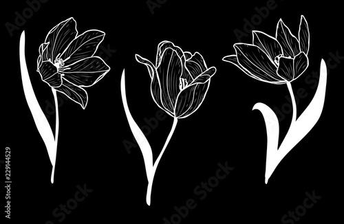 Fotobehang Bloemen zwart wit hand drawn floral decorations