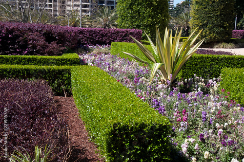 Foto op Canvas Tuin Sydney Australia, colorful springtime flowers and hedges