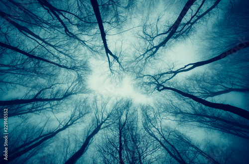 Foto  dark scary surreal forest dramatic perspective