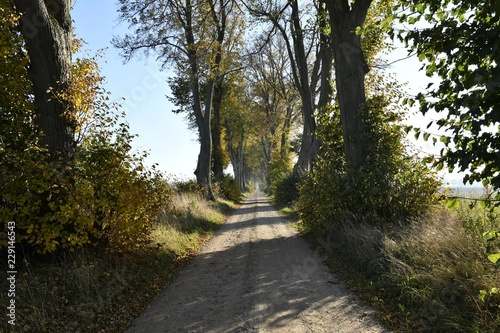 Autumn on a Kashubian dirt road