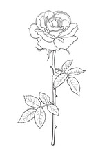 Black And White Rose Flower Wi...