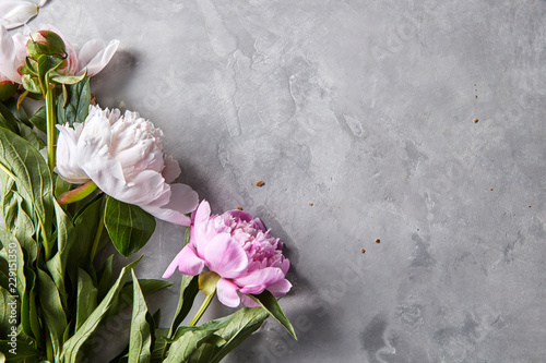 Fotobehang Bloemen Corner frame of pink and white peonies on a gray concrete background with space for text. Natural layout for postcard