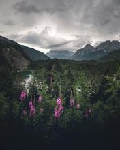 Alpenblumen Und Im Hintergrund Der Grossglockner  In Der Abendstimmung An Der Grossglockner Hoachalpenstrasse