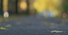Low Angle Shot Of Fallen Autumn Leaves On Sidewalk In The Morning With Moving Cars On Background