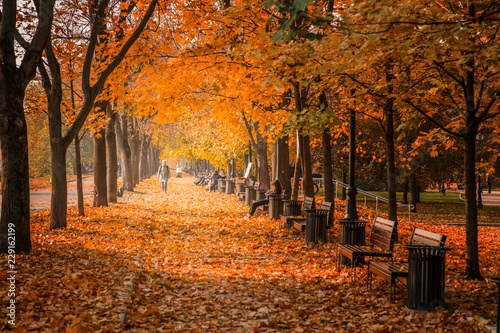 fototapeta na drzwi i meble Autumn foliage in the park. October, Moscow