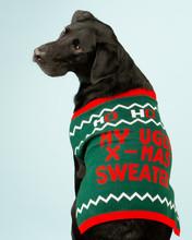 Adorable Young Black Labrador ...