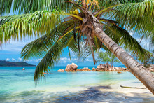 Tropical Beach With Palm And T...