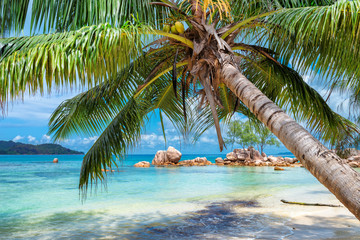 Fototapeta Drzewa Tropical beach with palm and turquoise sea. Summer vacation and travel concept.