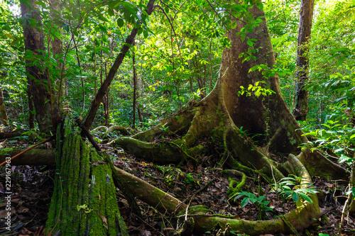 Papiers peints Noir Lush undergrowth jungle vegetation