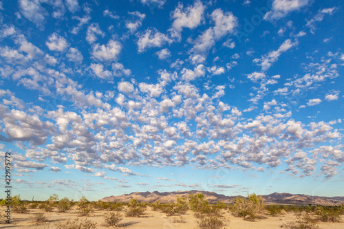 Tuinposter Pool Californian desert landscape with morning light, and fluffy clouds overhead