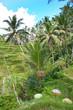 bali indonésie rizieres de tegallalang
