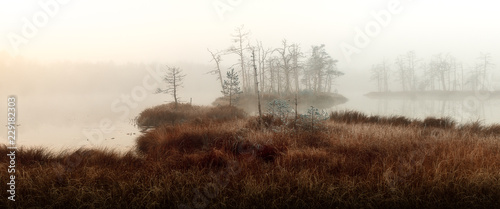 Fotografia autumn misty swamp
