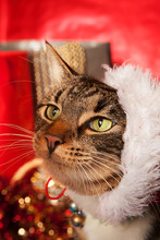 Tabby Cat With Santa Hat Sidew...