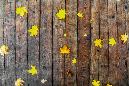 Garden Poster Floral Maple autumn leaves on wooden boards