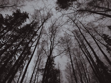 Black And White Photo Of Autumn Weather, Gray Sky And Bare Branches Of Trees. Depressed Mood Image Processing. Late Autumn And Early Winter. Sadness Longing