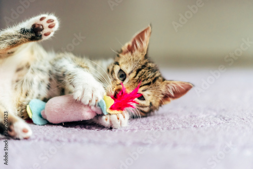 Obraz Cute Baby Cat Playing At Home - fototapety do salonu