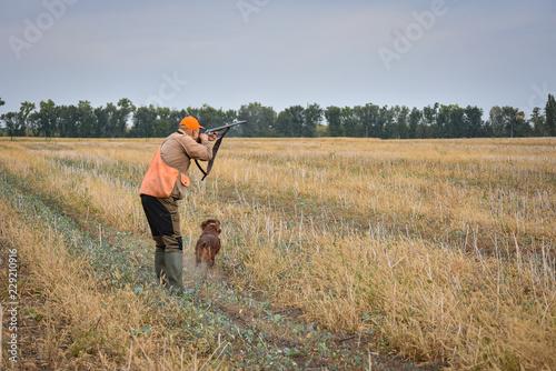 Carta da parati Red irish setter dog in field. Point a bird throw hunting.