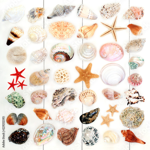 Large seashell collection on rustic white wood background. Top view.