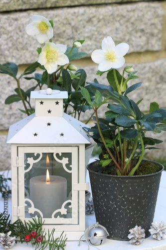Photo  christmas decoration with lantern and helleborus niger