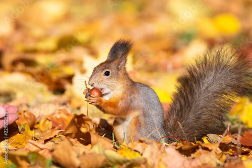 In de dag Eekhoorn Squirrel in the autumn park