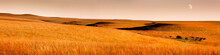 Beautiful Kansas Tallgrass Pra...