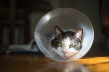 An Injured Cat Is Recovering F...