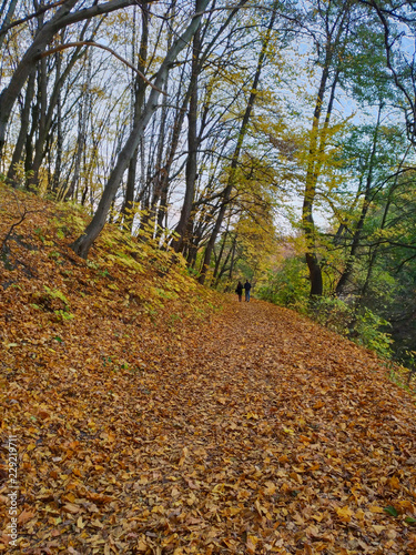 Fotografia, Obraz  Pair walking, autumn in the park