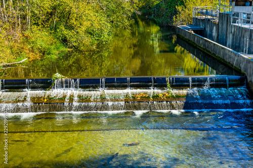 Valokuva  Fish Reflection Issaquah Creek Salmon Hatchery Washington