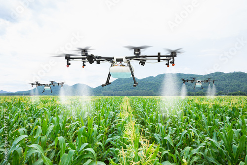 Agriculture drone fly to sprayed fertilizer on the sweet corn fields Canvas Print
