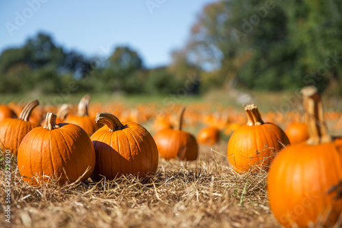 orange pumpkins at outdoor farmer market Canvas