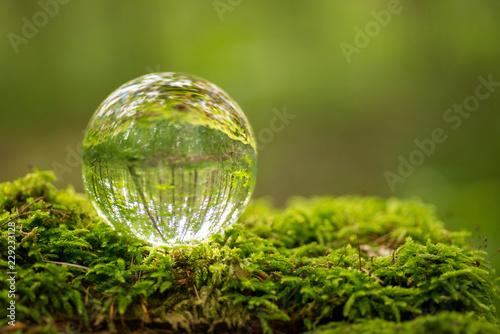 Stampa su Tela Glaskugel im Wald