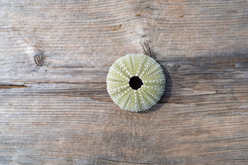 Fototapeta Top view of the shell of a sea urchin on a brown weathered board.