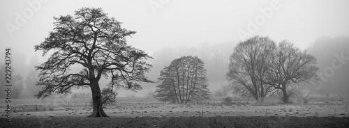 Fotografie, Obraz  Landschaft im Nebel