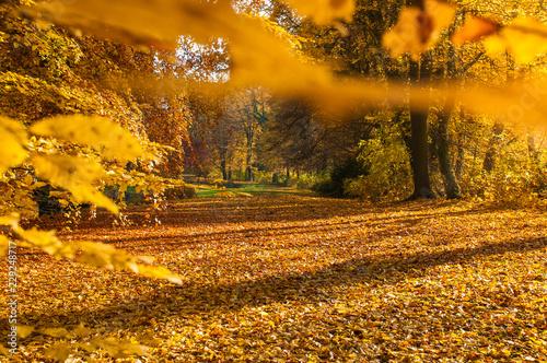 Aluminium Prints Autumn Goldener Oktober