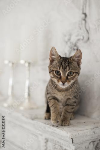 Photo Cute playful kitten in stylish interior