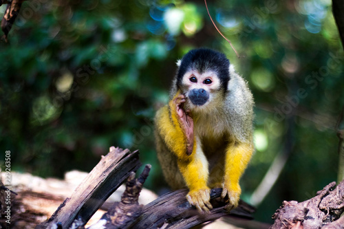 Canvas Prints Monkey monkey thinking on a tree