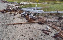 Logs Driftwood And Debris Wash...