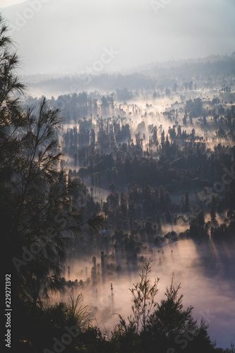 Poster Morning with fog An overhead view of a foggy forest at dawn
