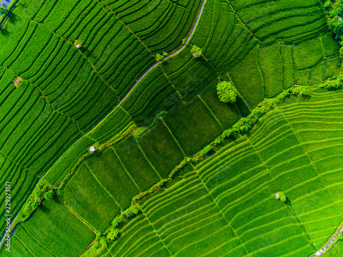 Valokuva  Aerial view of the rice field on the island of Bali, Indonesia