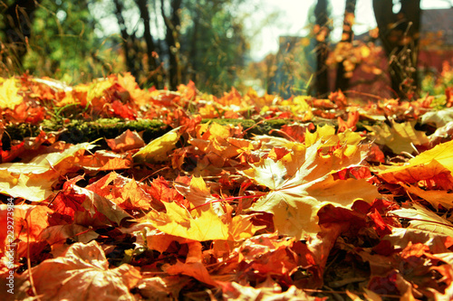 zlota-jesien