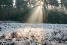 Rays Of Sunlight And Frost At Sunrise. Norfolk, UK.